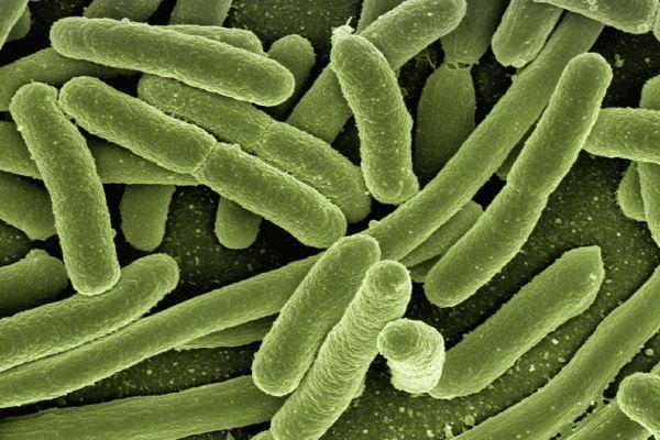 Fibromialgia: il ruolo patogenetico delle disbiosi intestinali