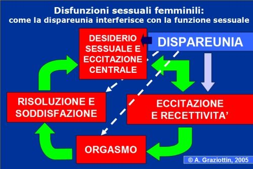 In questo schema si osserva l'impatto della dispareunia sul ciclo della funzione sessuale, e in particolare sul desiderio e sull'eccitazione mentale e periferica.