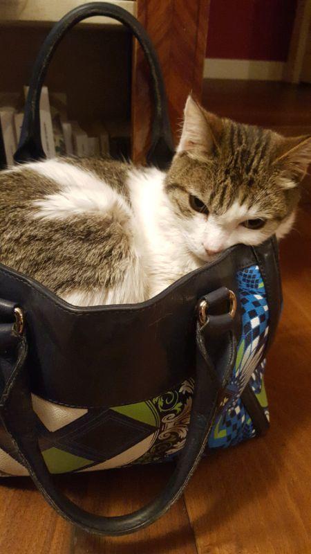«Portami con te». Sibilla si infila nella borsa, quando vede il trolley e intuisce che sto per partire. Emozioni d'amore.