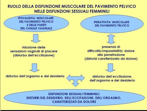 Figura 1. Ruolo della disfunzione muscolare del pavimento pelvico nelle disfunzioni sessuali femminili